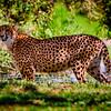 20160327_San Diego Zoo Safari Park_1839