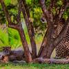 20160327_San Diego Zoo Safari Park_1838