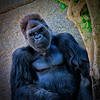 20160327_San Diego Zoo Safari Park_1765