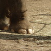 beautifully pedicured feets, the last shot of the day