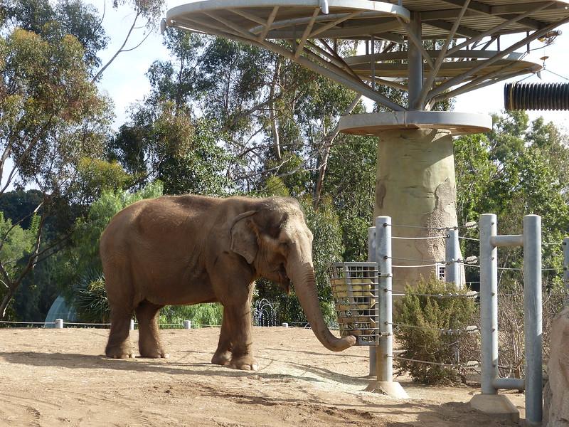 after the longest trek ever, we finally saw an elephant!  Asian