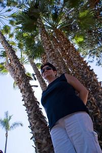 Guarda-palmeira