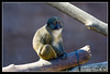 Primate at San Diego Zoo (I do not recall the species).