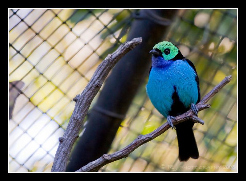 Unidentified bird in the San Diego Zoo Hummingbird Aviary.  Beautiful bird.