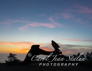 Torrey Pine Eagle