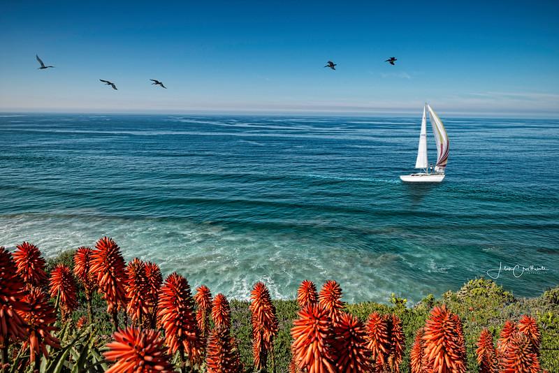Sailing La Jolla