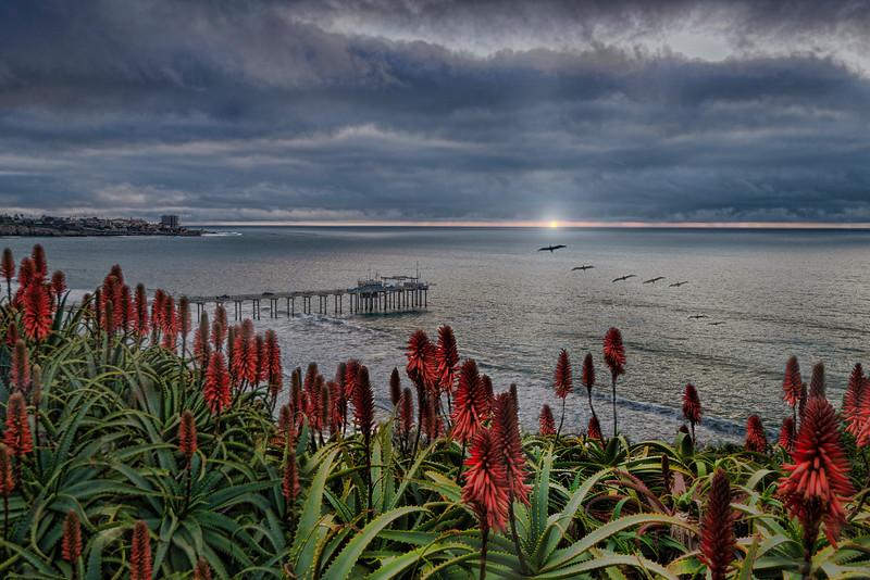Scripps Pier Sunset and Seabirds