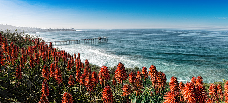 La Jolla shores and Aloe Plants