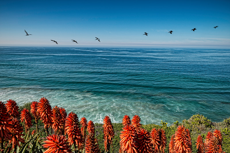 Seabirds in La Jolla
