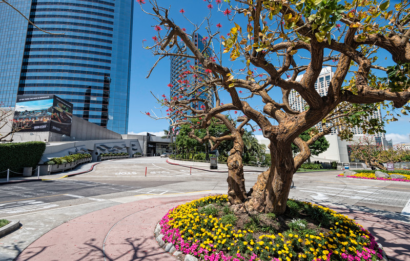 Colorful flowers blooming outside the Marriott Marquis