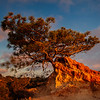 20130407_Torrey Pines_9495