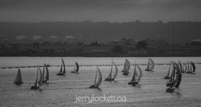 Sailboat Race, San Diego