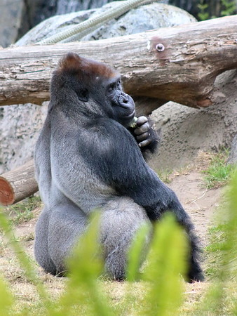 Draw me like one of your French gorillas