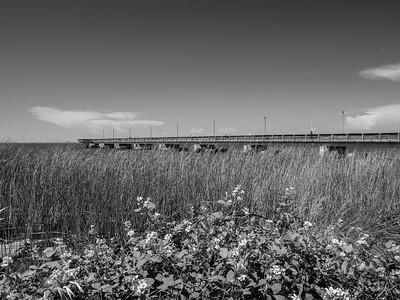 Foreground: Fishing Pier, Sacramento-San Joaquin River Delta, and Wild Blackberry Flowers In the distance: Windmills in Rio Vista, CA (left)  Antioch/Oakley Regional Shoreline. Antioch, CA, USA
