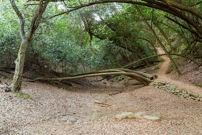 Forest. Lake Chabot Regional Park - Castro Valley, CA, USA
