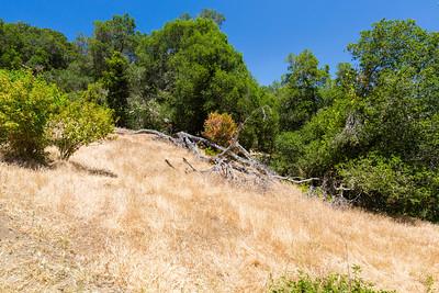 Pleasanton Ridge Regional Park - Sunol, CA, USA