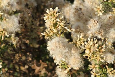 Flower. Shadow Cliff Regional Park - Pleasanton, CA, USA
