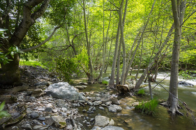 Creek. Near Ohlone Road. Sunol Regional Wilderness - Sunol, CA, USA