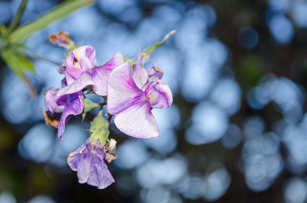 california; flowers; golden gate national recreation area; marin headlands; san francisco bay area; santa cruz mountains Plenty of flowers color the hillsides in the spring.