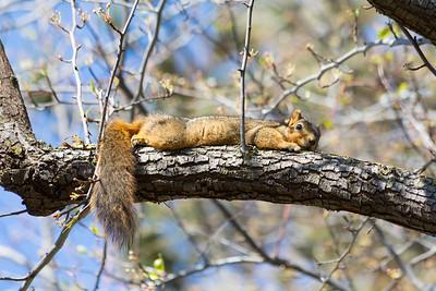 Squirrel. Arroyo Del Valley Trail - Pleasanton, CA, USA