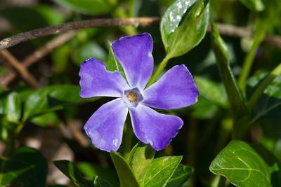 Flower. Arroyo Del Valley Trail - Pleasanton, CA, USA