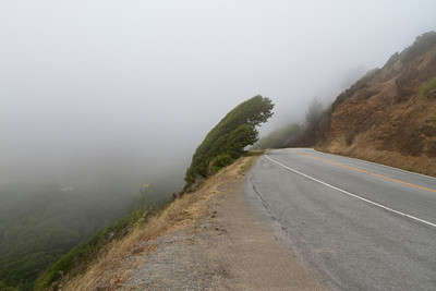 Fog. Mill Valley, CA, USA