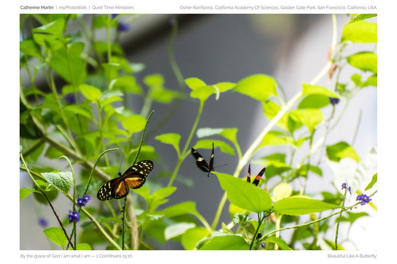 Beautiful Like A Butterfly