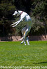 Serious Air<br /> Emily -  Dalmatian Whippet Mix<br /> St Mary's Dog Park, San Francisco