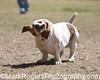 Bassett Hound<br /> Stern Grove Dog Park<br /> San Francisco