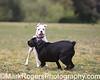 Boxer<br /> Stern Grove Dog Park<br /> San Francisco