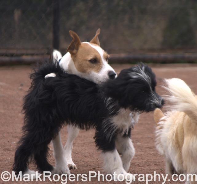 Rusty, Lola & Bizzy