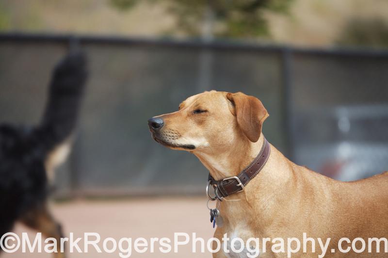 Kaya<br /> Rhodesian Ridgeback