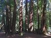 Samuel P. Taylor State Park.