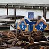 Pier 39 Seals
