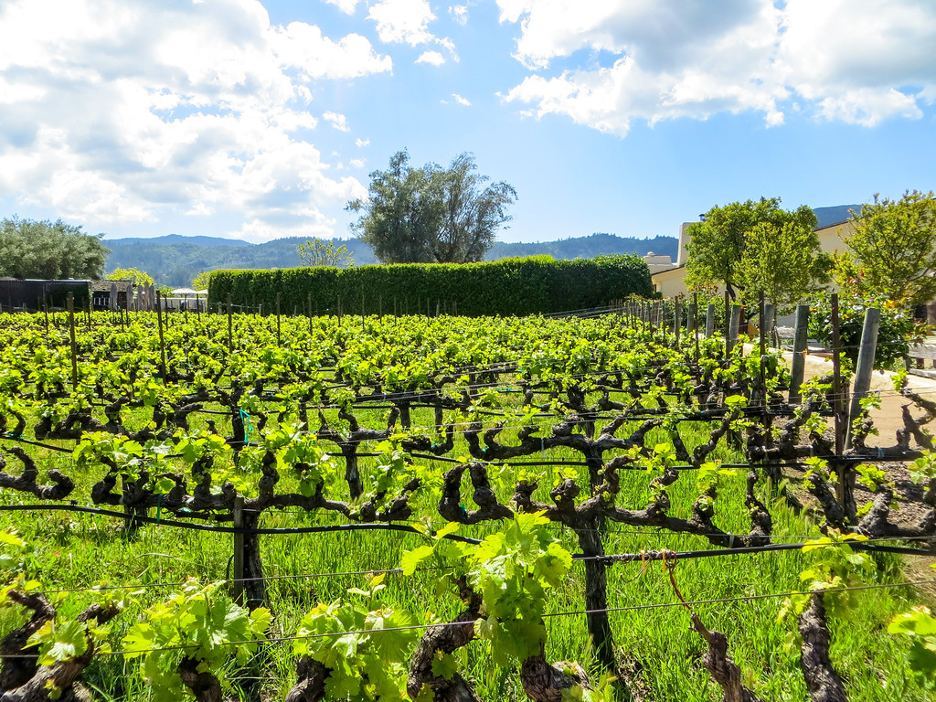 go to the napa valley and find inner peace in life