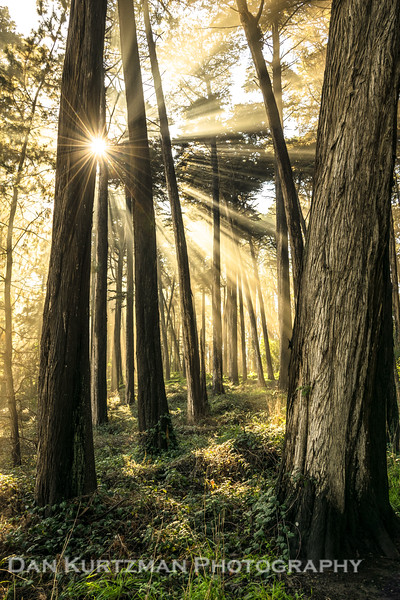 Light Rays Through the Trees in San Francisco