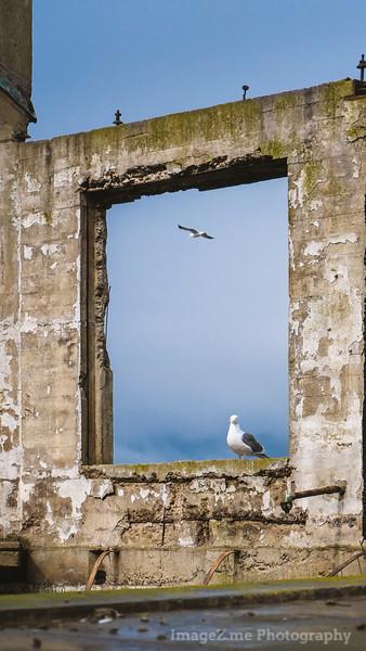 Seagulls posing in a frame-like window of burnt-down club house in Alcatraz Island.