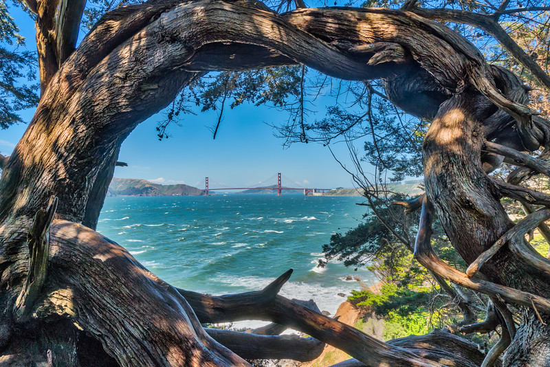 Golden Gate Bridge Tree Frame