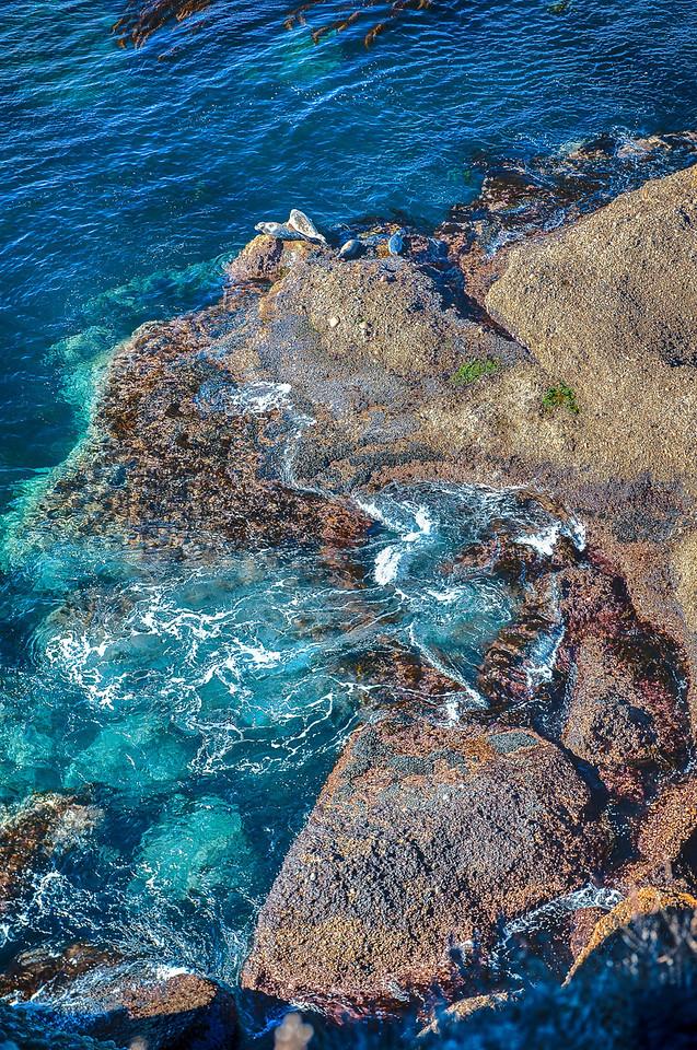 Point Lobos - On the  Rocks_