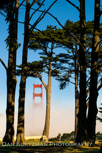 Golden Gate Bridge and Cypress Trees