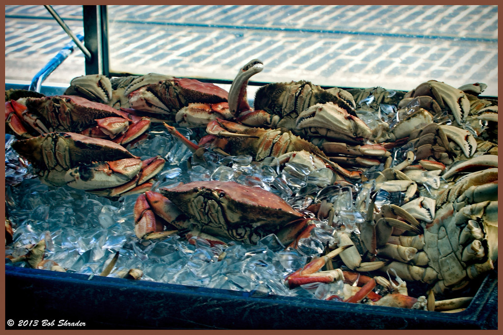A Crabby Day!
