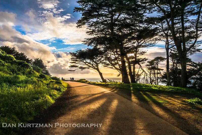 Cypress Shadows at Lands End