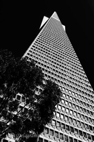 20180413_San Francisco_5476_BW