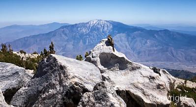 Mountain Chipmunk
