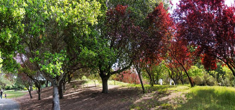 Chinese Cultural Garden, San Jose, California