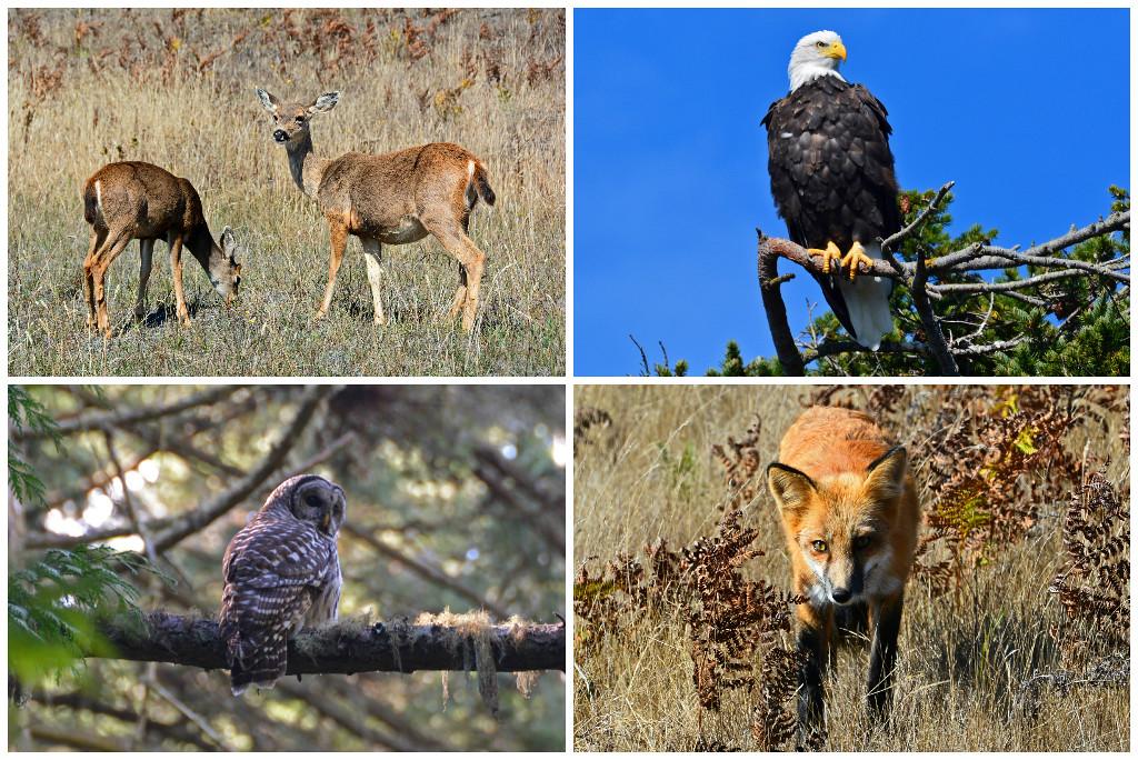 San Juan Island wildlife