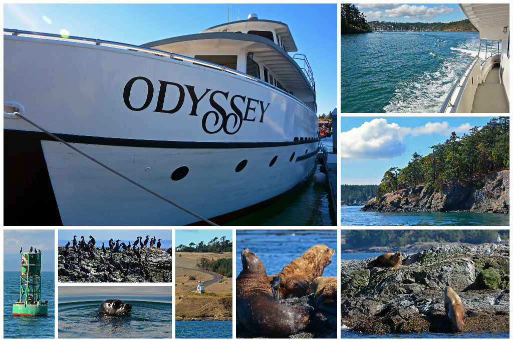 San Juan Island Boat Tours