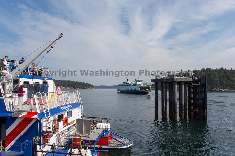 Friday Harbor 47