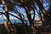 Lime Kiln Point Lighthouse 19