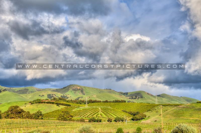 edna valley 6544
